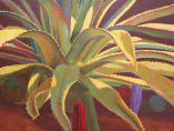 Sundown#5,agave plant