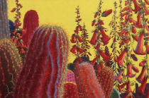 Desert Garden #20,flowering cacti, colorful, bright, bold .